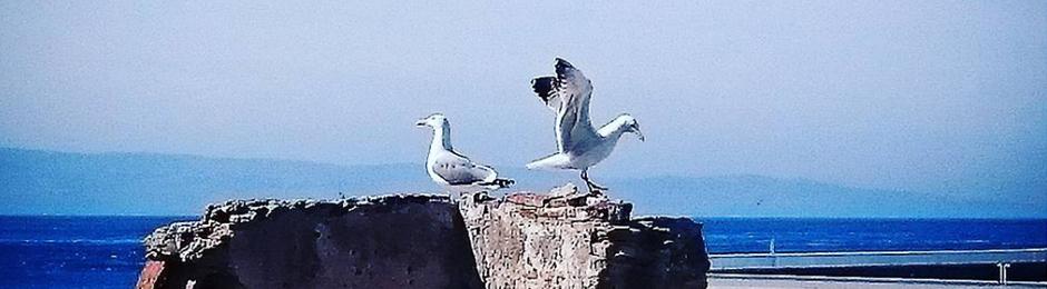 Aves que se pueden ver en Tarifa