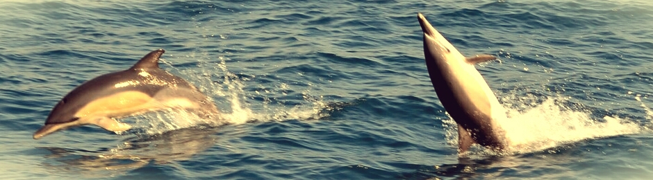 Ver delfines en Tarifa
