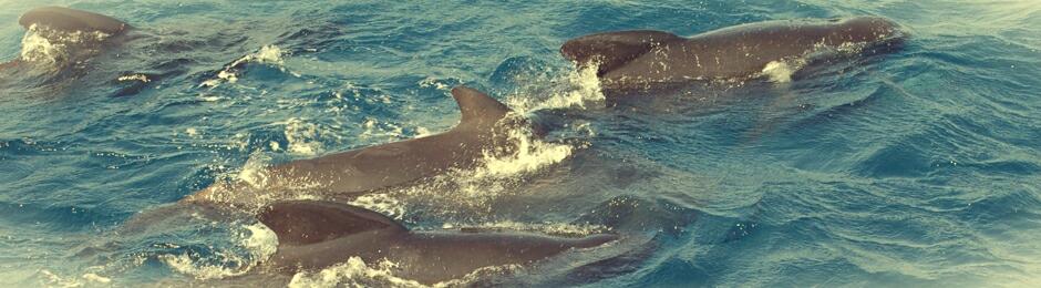 Ver ballenas en Tarifa