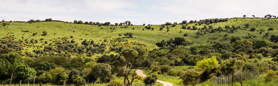 Fauna y flora del Parque de los Alcornocales