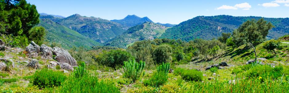 Vegetación del Parque de los Alcornocales