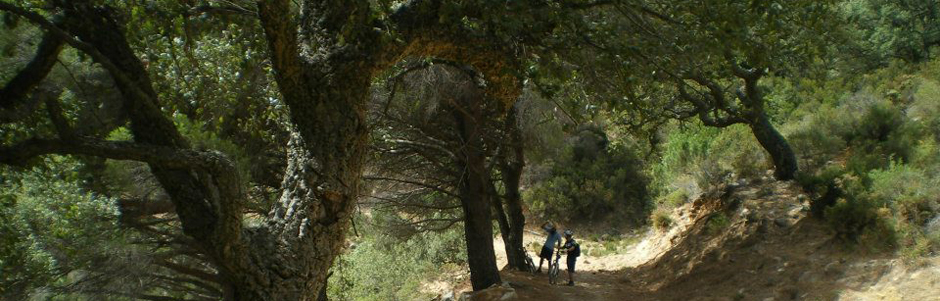 Excursiones y actividades en Tarifa