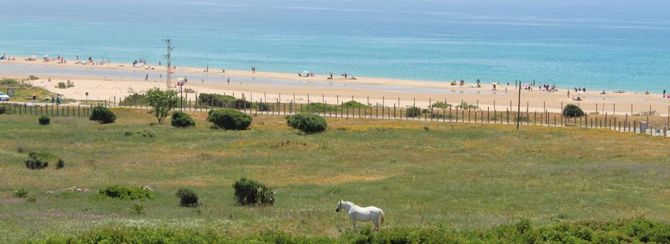 Caballos en la playa de Bolonia
